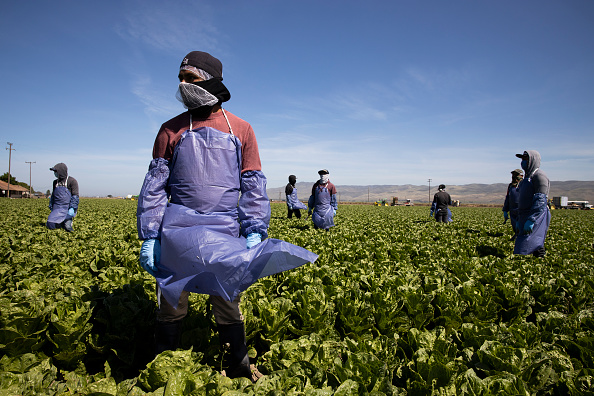 Essential Services「Immigrant Agricultural Workers Critical To U.S. Food Security Amid COVID-19 Outbreak」:写真・画像(0)[壁紙.com]