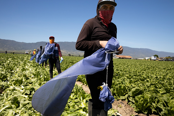 Agriculture「Immigrant Agricultural Workers Critical To U.S. Food Security Amid COVID-19 Outbreak」:写真・画像(13)[壁紙.com]
