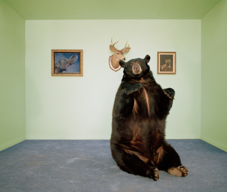 イエローキャブ「Black bear sitting up on rug in living room」:スマホ壁紙(2)