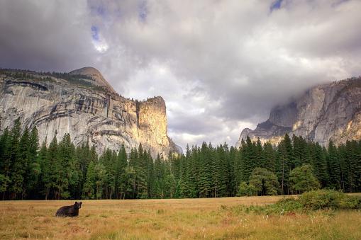 Half Dome「black bear in Yosemite valley」:スマホ壁紙(11)