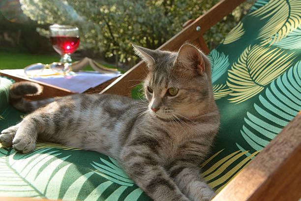 Cat laying on deckchair in the sun:スマホ壁紙(壁紙.com)
