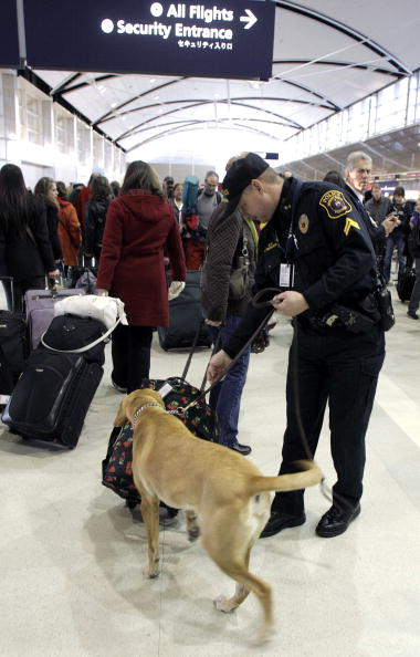 Sniff Dog「Nigerian Man Attempts To Blow Up Delta Plane Before Landing In Detroit」:写真・画像(19)[壁紙.com]