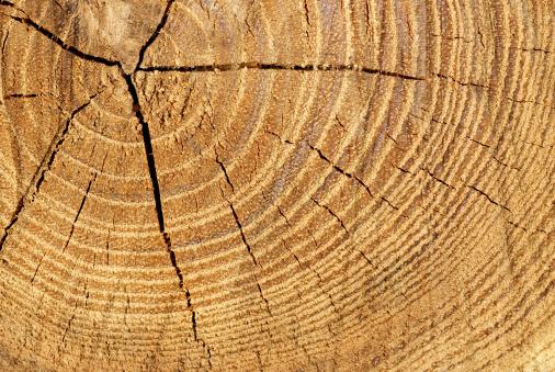Fallen Tree「Annual Rings」:スマホ壁紙(13)