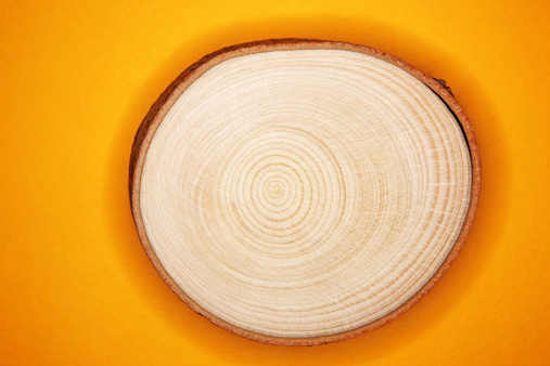 Tree Ring「Annual ring of tree trunk」:スマホ壁紙(11)