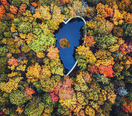 Boreal Forest「Autumn Love」:スマホ壁紙(16)