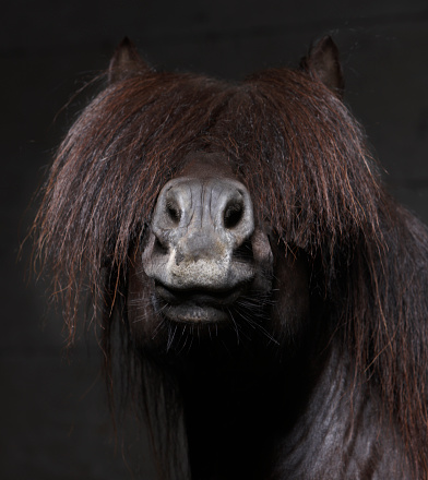Animal Mane「Icelandic Stallion with Mane Over Eyes」:スマホ壁紙(13)