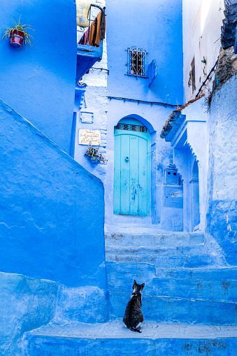 Lost「A dark coloured cat looks up quizzically at the turquoise door in a typical blue painted alleyway, wondering if this is the right way, in Chefchaouen, known as the Blue City, set in the Rif Mountains, Morocco」:スマホ壁紙(11)