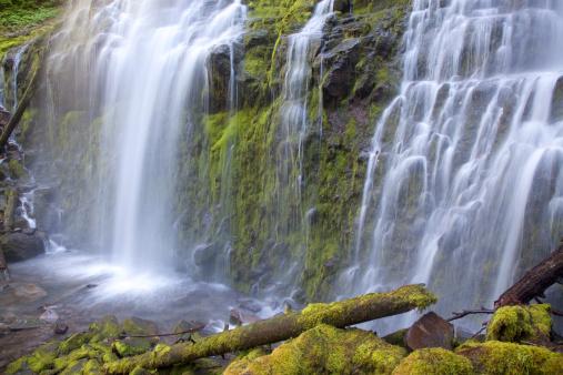 Willamette National Forest「View of waterfall.」:スマホ壁紙(7)
