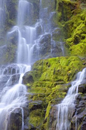 Willamette National Forest「View of waterfall.」:スマホ壁紙(5)