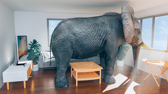 Elephant「Concept of living in a small house and wanting to move to something bigger」:スマホ壁紙(1)