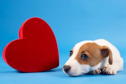 バレンタイン「Dog with heart」:スマホ壁紙(10)