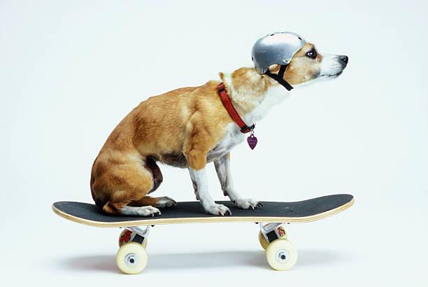 Dog with Helmet Skateboarding:スマホ壁紙(壁紙.com)