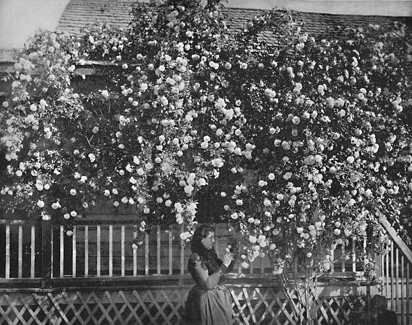 Abundance「A Rose-Decked Home」:写真・画像(11)[壁紙.com]