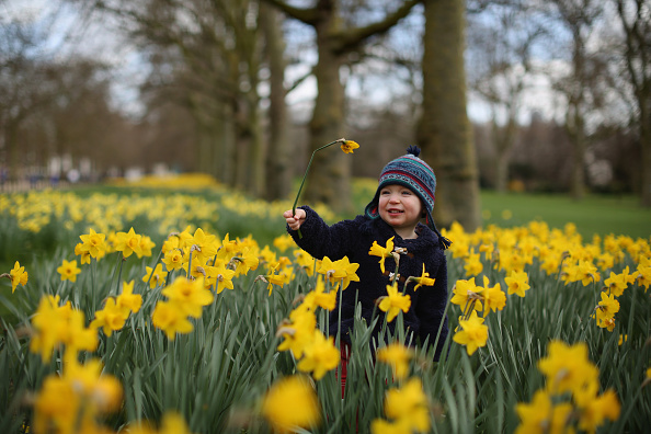 flower「Spring Emerges In London」:写真・画像(11)[壁紙.com]