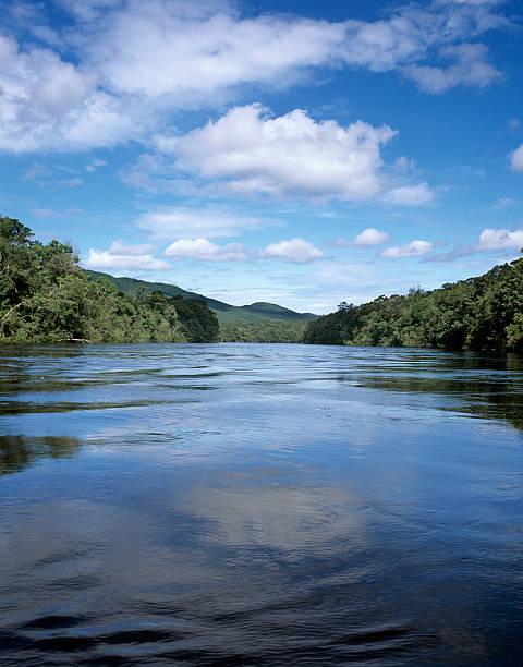 River in the jungle:スマホ壁紙(壁紙.com)