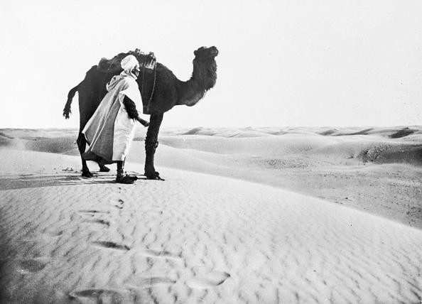 Domestic Animals「Sahara Camel」:写真・画像(12)[壁紙.com]