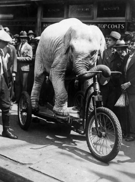 Tricycle「Elephant On A Tricycle」:写真・画像(14)[壁紙.com]