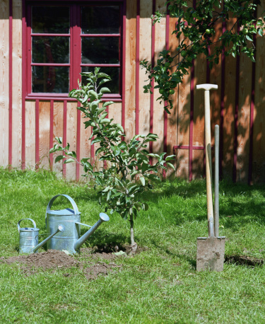 Planting「Watering cans and spade in garden, by newly planted tree」:スマホ壁紙(1)