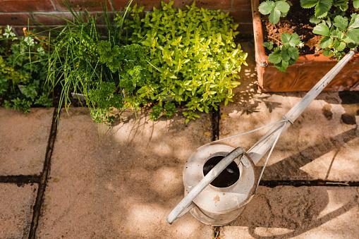 趣味・暮らし「Watering can next to plants」:スマホ壁紙(4)