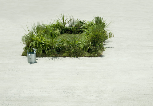 Pour Spout「Watering can and lush lawn in cement courtyard」:スマホ壁紙(8)
