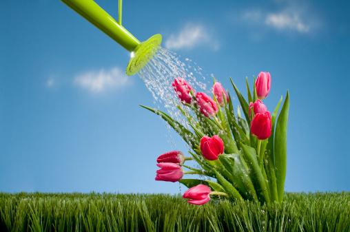 観賞用庭園「じょうろ Tullips シャワー」:スマホ壁紙(8)