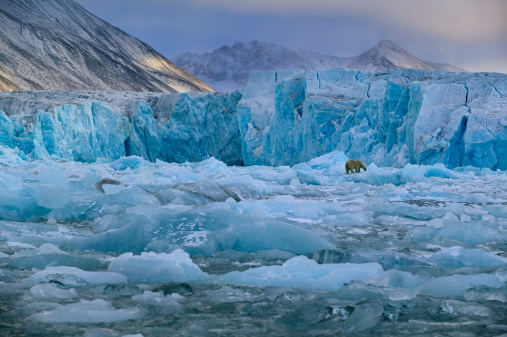 Svalbard Islands「Arctic, Spitsbergen, polar bear on Monaco Glacier」:スマホ壁紙(10)