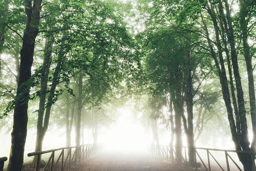 Avenue「Foggy Country Road」:スマホ壁紙(10)