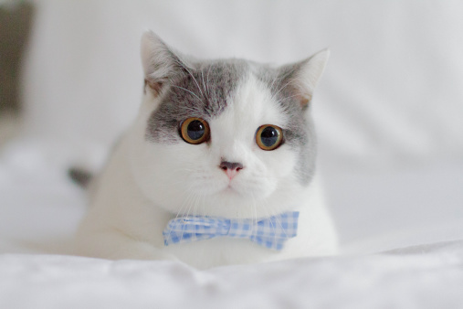 Bow Tie「Kitten with bowtie」:スマホ壁紙(5)