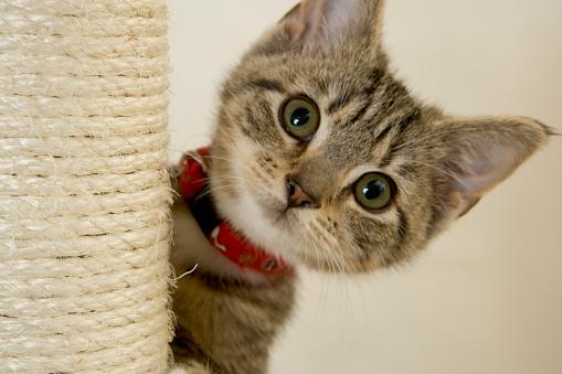 Kitten「キトン」:スマホ壁紙(8)