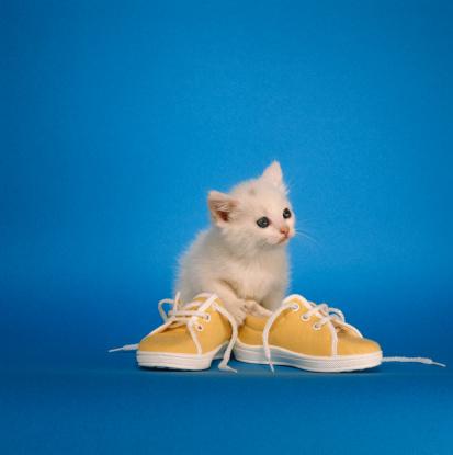 Kitten「Kitten with shoes」:スマホ壁紙(19)