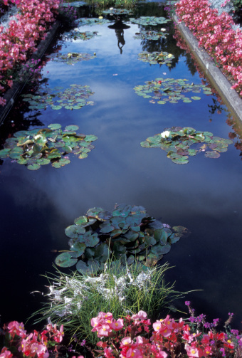 Water Lily「Lilies Floating In A Peaceful Fount」:スマホ壁紙(14)