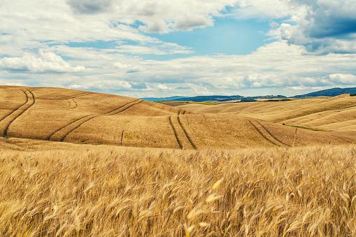 Rolling Landscape「Toscana landscape and wheat field」:スマホ壁紙(9)