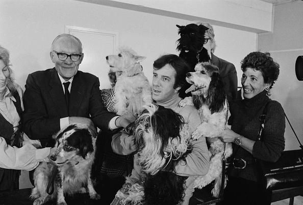 William Lovelace「Harty Plus Dogs」:写真・画像(11)[壁紙.com]