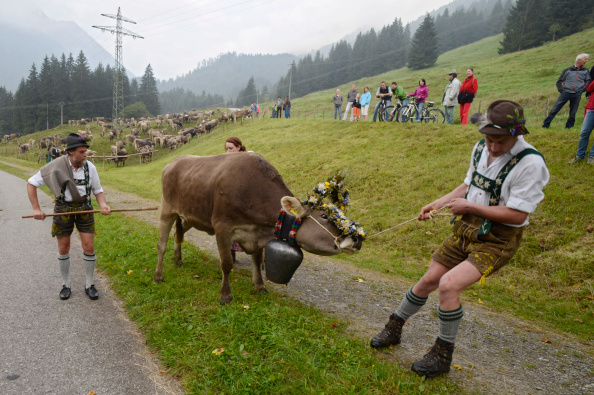 Tradition「Cattle Return From Alpine Summer Grazing」:写真・画像(11)[壁紙.com]