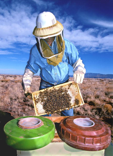 Sandia Mountains「Beekeeper Holds Honeybees That Are Helping Researchers At Sandia National Laboratories And The Uni」:写真・画像(2)[壁紙.com]