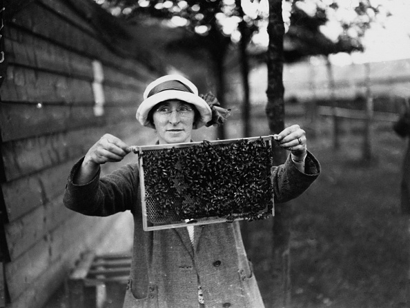 Agriculture「Beekeeper」:写真・画像(16)[壁紙.com]