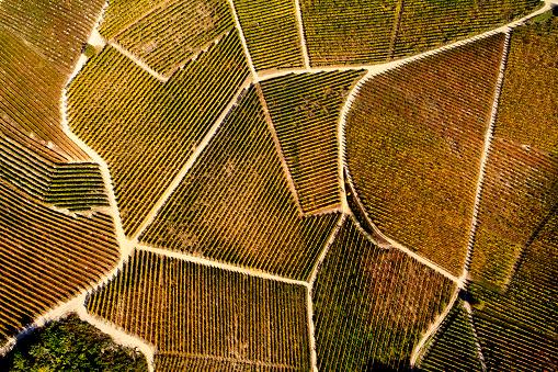 Piedmont - Italy「Barolo Wine Region in Autum, Piedmont, Italy」:スマホ壁紙(8)