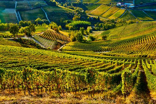 Piedmont - Italy「Barolo Wine Region in Autum, Piedmont, Italy」:スマホ壁紙(6)