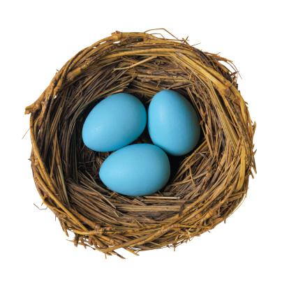 Animal Egg「Robin Eggs in Nest」:スマホ壁紙(10)