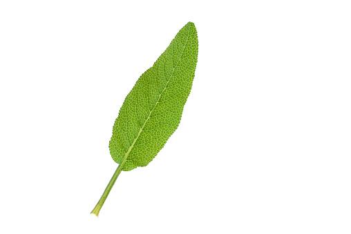 Spice「Sage, garden sage, Salvia officinalis, leaf, white background」:スマホ壁紙(6)