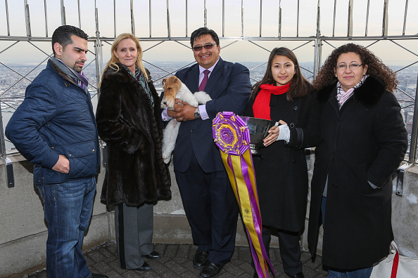 star sky「'Best In Show' Winner Sky The Fox Terrier Visits The Empire State Building」:写真・画像(8)[壁紙.com]
