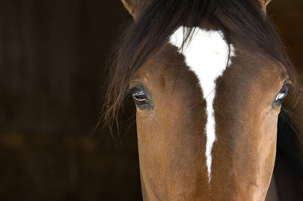 Horse Head:スマホ壁紙(壁紙.com)