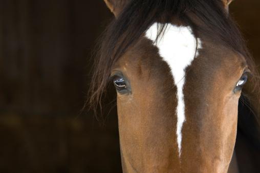 Brown Hair「Horse Head」:スマホ壁紙(18)