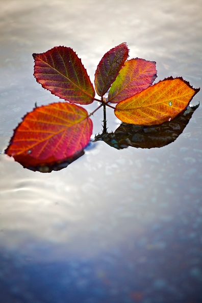 Yellow「Sprig Of Red And Gold Autumn Leaves Floating On The Surface Of Water」:写真・画像(10)[壁紙.com]