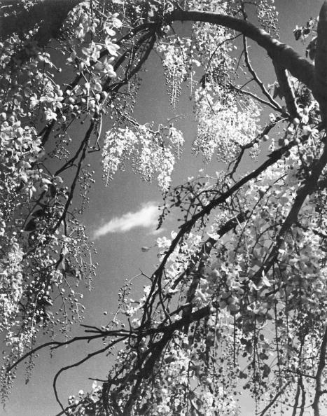 Season「Indian Springtime」:写真・画像(15)[壁紙.com]