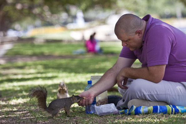 Squirrel「Intense Heat Waves Continues To Drive Temperatures Into Triple Digits In Texas」:写真・画像(3)[壁紙.com]