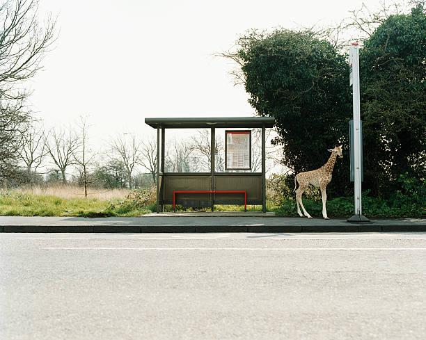 Giraffe at a bus stop:スマホ壁紙(壁紙.com)