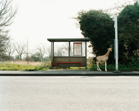Giraffe「Giraffe at a bus stop」:スマホ壁紙(17)
