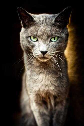 Mixed-Breed Cat「Animal Shelter Cat Portrait Series III」:スマホ壁紙(16)