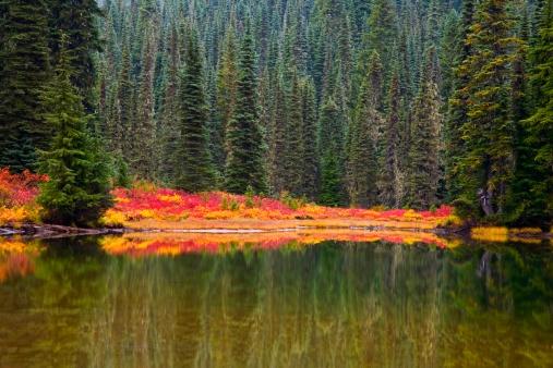 レーニア山国立公園「reflection on lake in autumn」:スマホ壁紙(19)